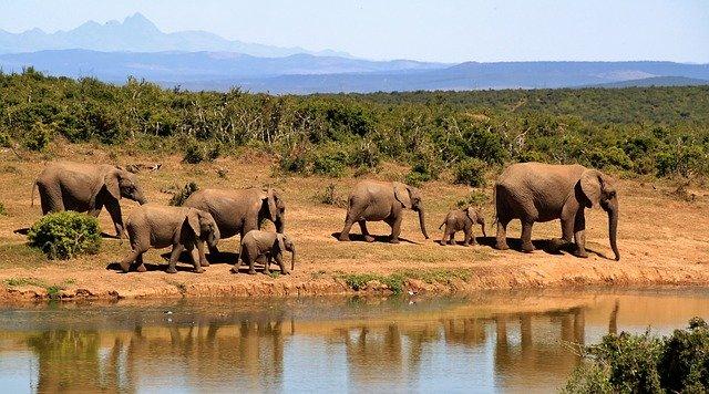 Rondreis Zuid-Afrika voorbereiden